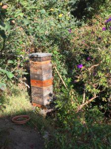 Bee hive along Greenwich Steps