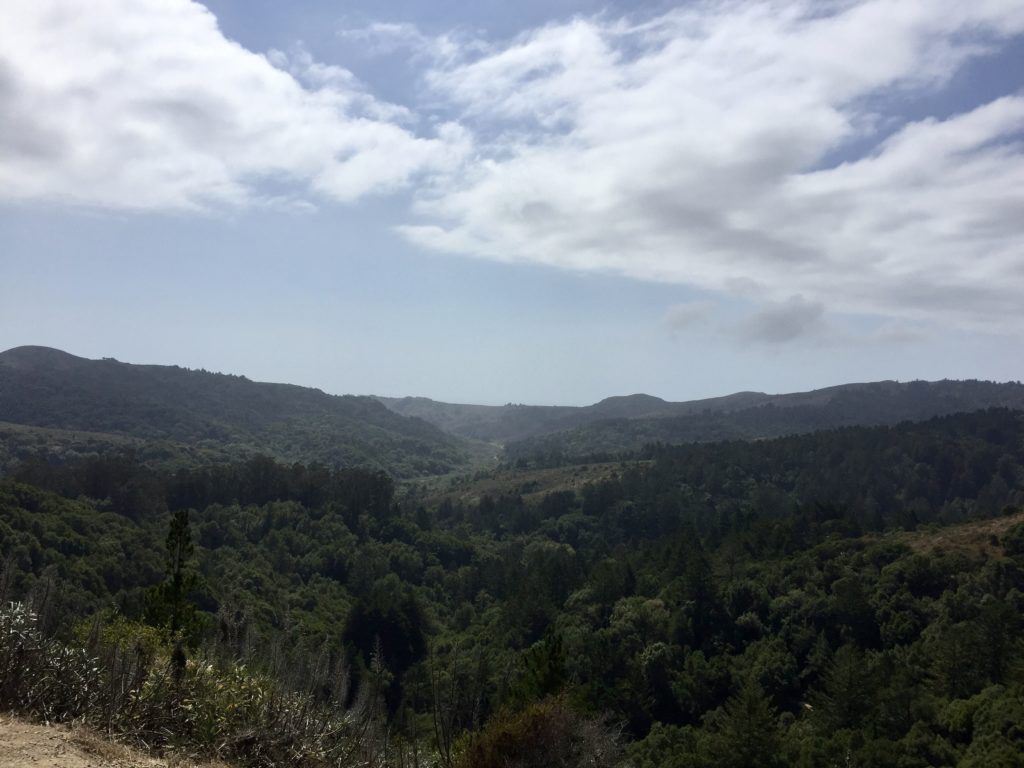 View near Muir Woods